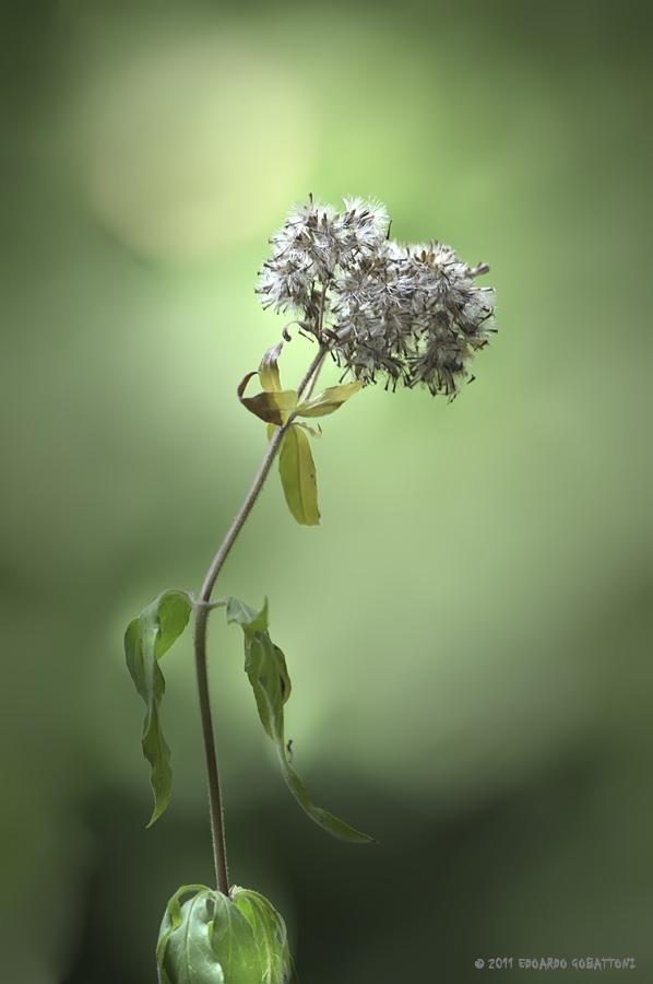 flower of poetry