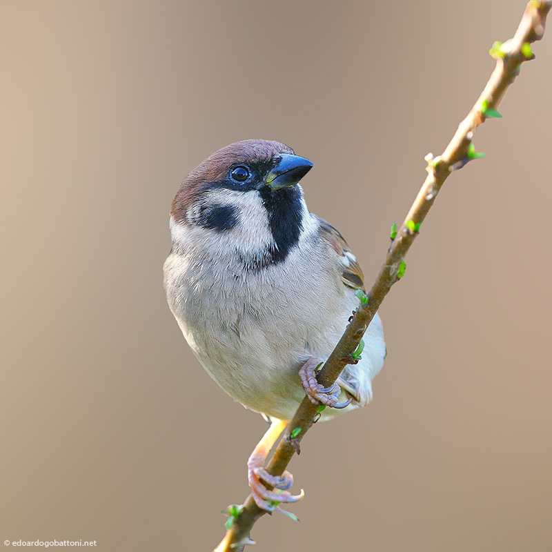 my beautiful world, tree sparrow
