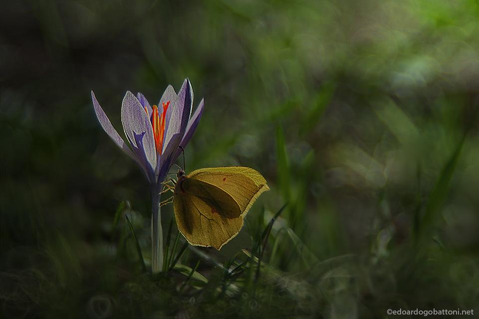 Butterfly in February