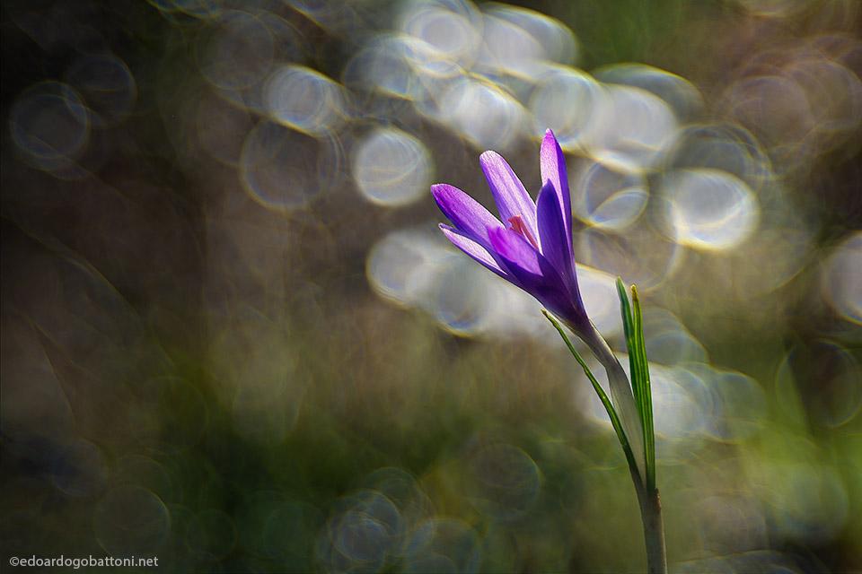 light's living flower