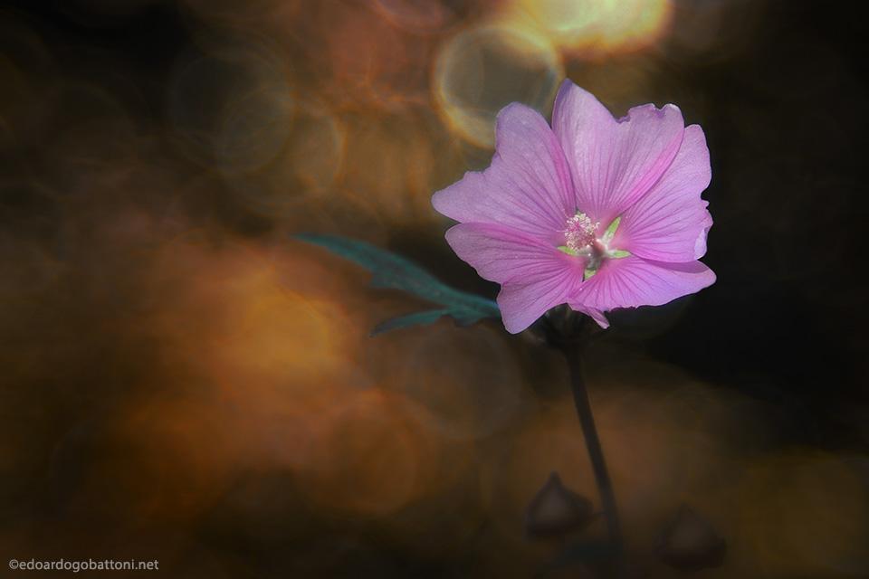 960-pink beauty -EDOARDO GOBATTONI