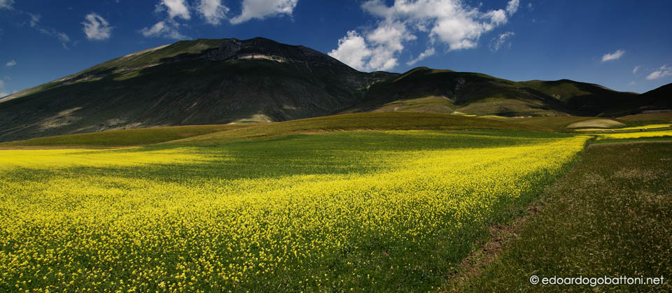 960-yellow land series - one-EDOARDO GOBATTONI
