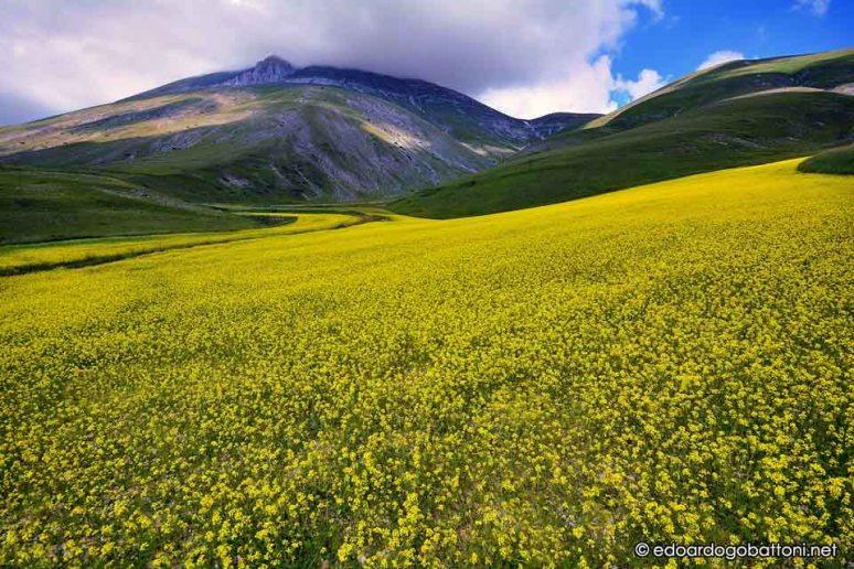960-yellow land series two -EDOARDO GOBATTONI