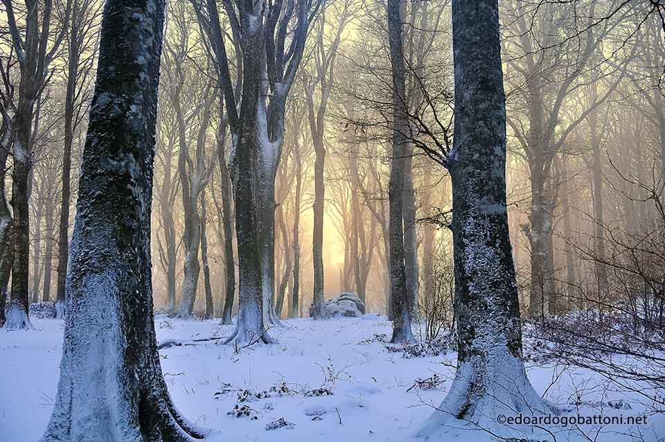 960-snowy-beech-forest-at-sunset-edoardo-gobattoni