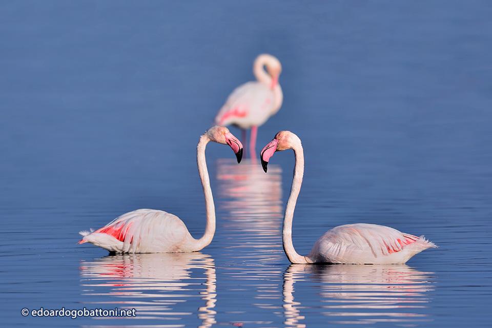 960-three-pink-flamingos-edoardo-gobattoni