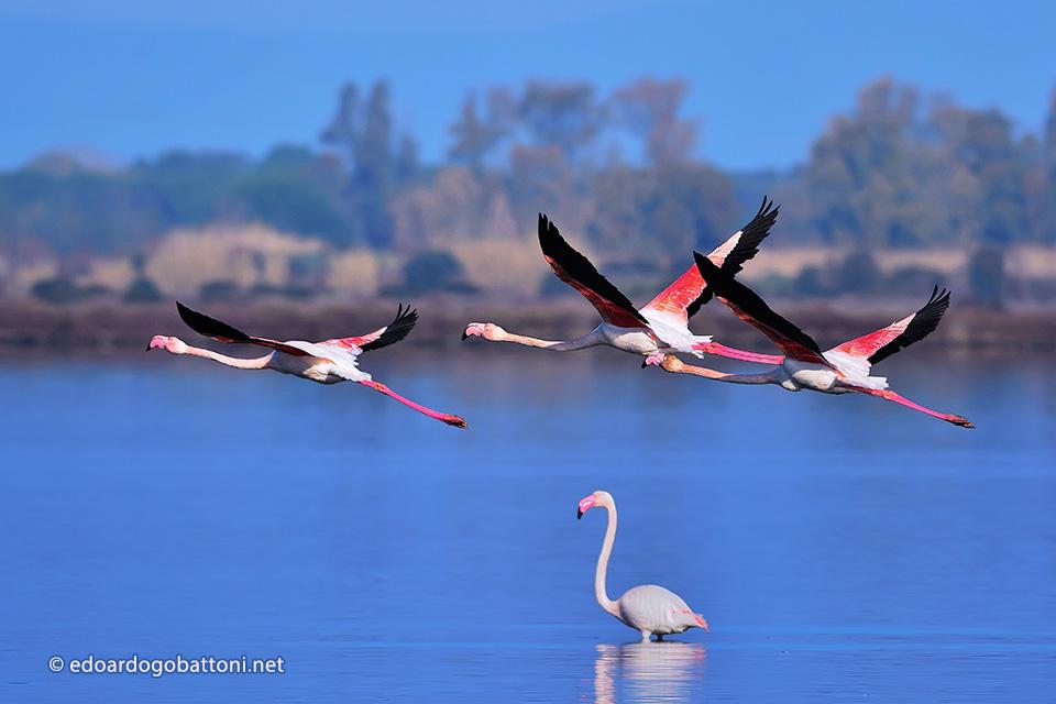 960-three-pink-flamingos2